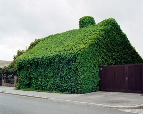 A house entirely overgrown with foliage