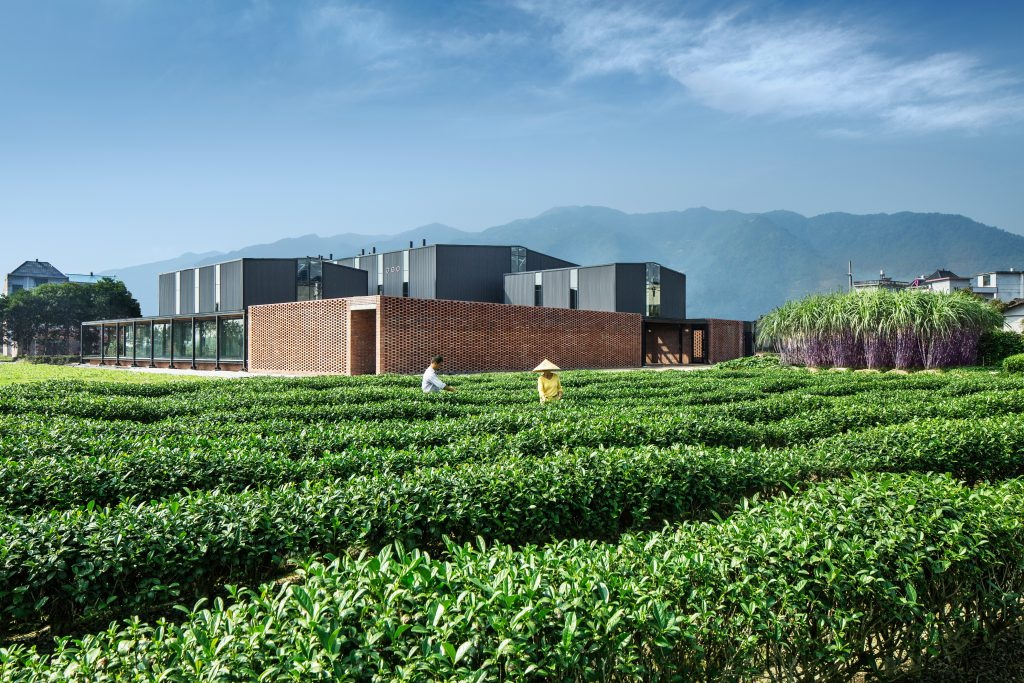 A tea plantation with two workers and a hall in the background