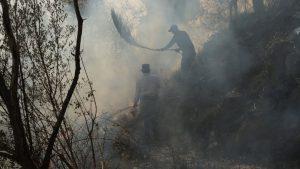 Zwie Männer stehen in einem Wald umgeben von Rauch
